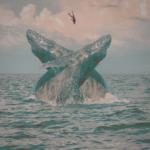 """""""Blue Whale"""" è il nuovo singolo di Rakno"""
