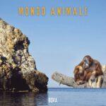 """""""Mondo Animale"""" è il nuovo singolo di BOVA"""